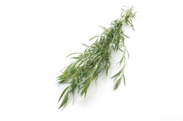 Tárkonyból készült finomságok: tárkonyecet és tárkonyos burgonyaleves | Gyógyszer Nélkül